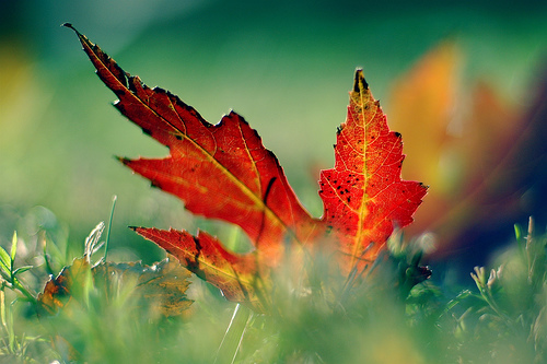 autumn-leaves2